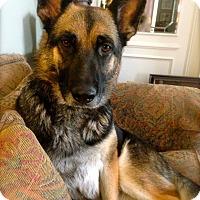 Adopt A Pet :: Bella - Princeton, KY