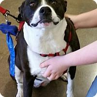 Adopt A Pet :: Raspberry - Phoenix, AZ