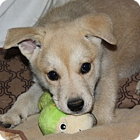 Adopt A Pet :: Zena - PENDING, in Maine - kennebunkport, ME