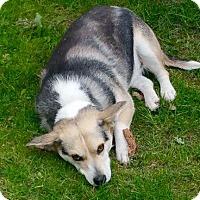 Adopt A Pet :: Mia - Morgantown, WV