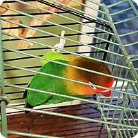 Adopt A Pet :: Laverne - Lenexa, KS