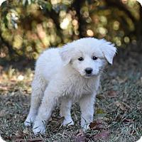 Adopt A Pet :: Paris - South Dennis, MA
