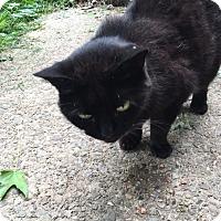 Adopt A Pet :: Charlie - Delmont, PA