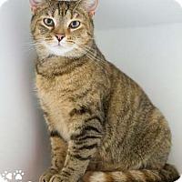 Adopt A Pet :: Carmine - Merrifield, VA