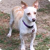 Adopt A Pet :: LM - Tallahassee, FL