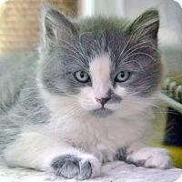 Adopt A Pet :: Calvin - Davis, CA
