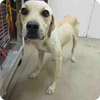 Adopt A Pet :: ANDREA - Sanford, FL