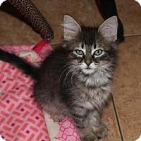 Adopt A Pet :: Sandor - Cypress, TX