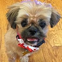 Adopt A Pet :: Daisy 30 - DeSoto, IA