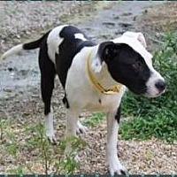 Adopt A Pet :: Moe - Baton Rouge, LA