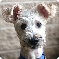 Adopt A Pet :: Bumble - Woonsocket, RI