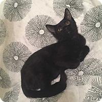 Adopt A Pet :: Tartar - Addison, IL