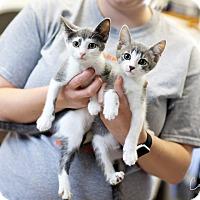 Adopt A Pet :: Amelia and Anita - Cape Girardeau, MO