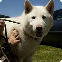 Adopt A Pet :: Rosco - Harvard, IL