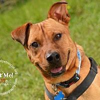 Adopt A Pet :: Cooper - Ft. Lauderdale, FL