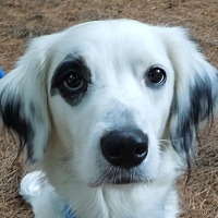 Adopt A Pet :: SAMMIE - Pine Grove, PA