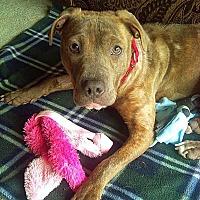 Adopt A Pet :: Addy - West Allis, WI