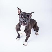 Adopt A Pet :: Sally - Decatur, GA