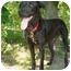 Photo 1 - Labrador Retriever Mix Dog for adoption in Clinton, Missouri - Fonzie