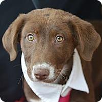 Adopt A Pet :: Garth Brooks - Plano, TX