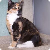 Adopt A Pet :: K-Dave1-Petal - Colorado Springs, CO