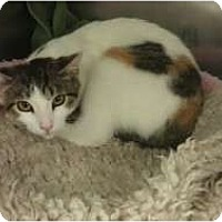 Adopt A Pet :: Clementine - Staten Island, NY