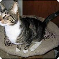 Adopt A Pet :: Peter - North Boston, NY