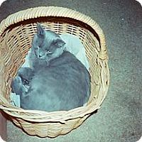 Adopt A Pet :: Strider - Bedford, MA