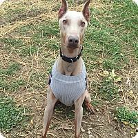 Adopt A Pet :: Lucas--pending - New Richmond, OH