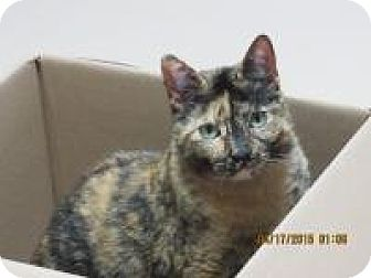 Calico Cat for adoption in Quilcene, Washington - Grace