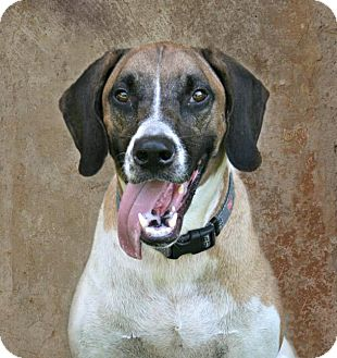 Black Mouth Cur Mix Dog for adoption in Lufkin, Texas - Odin