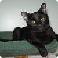 Adopt A Pet :: Nyssa - Powell, OH