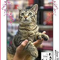 Adopt A Pet :: Suzzette - Albuquerque, NM