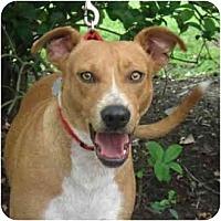 Adopt A Pet :: Sadie - Kingwood, TX