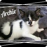 Adopt A Pet :: Archie - Orlando, FL