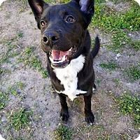 Adopt A Pet :: Doc - Fort Riley, KS
