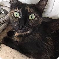 Adopt A Pet :: Kiana - Painted Post, NY