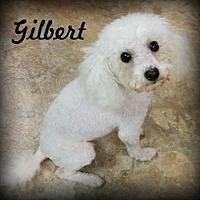 Adopt A Pet :: Gilbert - Anaheim Hills, CA