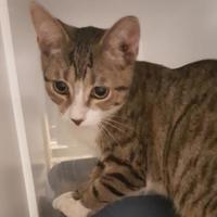 Adopt A Pet :: Zeus - Brownwood, TX