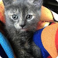 Adopt A Pet :: Princess Aurora - Hazlet, NJ