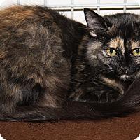 Adopt A Pet :: Cleopatra - Marietta, OH