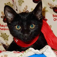 Adopt A Pet :: TUNA - Upland, CA