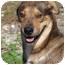 Photo 1 - Catahoula Leopard Dog/Shar Pei Mix Dog for adoption in Kirby, Texas - Binx