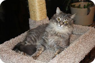 Domestic Longhair Cat for adoption in Smyrna, Georgia - Sadie