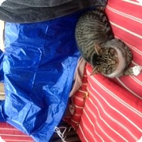Adopt A Pet :: Guess - Piscataway, NJ