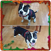 Adopt A Pet :: Reno - Chilhowie, VA