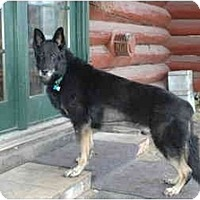 Adopt A Pet :: Jolly - Hamilton, MT