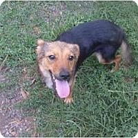 Adopt A Pet :: Paloma - Eden, NC