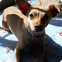 Adopt A Pet :: Camella - dewey, AZ