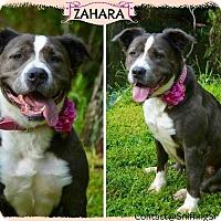 Adopt A Pet :: Zahara - Orlando, FL